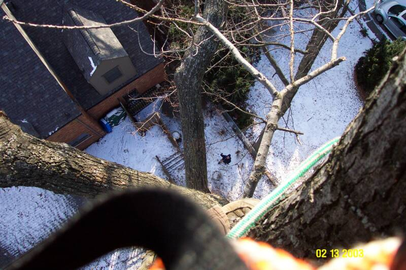 Same tree as water tower, just looking down!